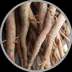 obat kuat, obat kuat biomate, tongkat Ali, macca root, khasiat maca root, manfaat akar maca, obat kuat biomate, biomate kiens, suplemen biomate,