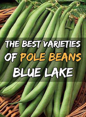 The Best Varieties Of Pole Beans To Grow In Your Garden