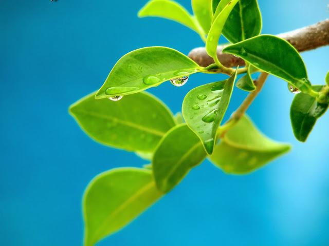 Transpiracion plantas