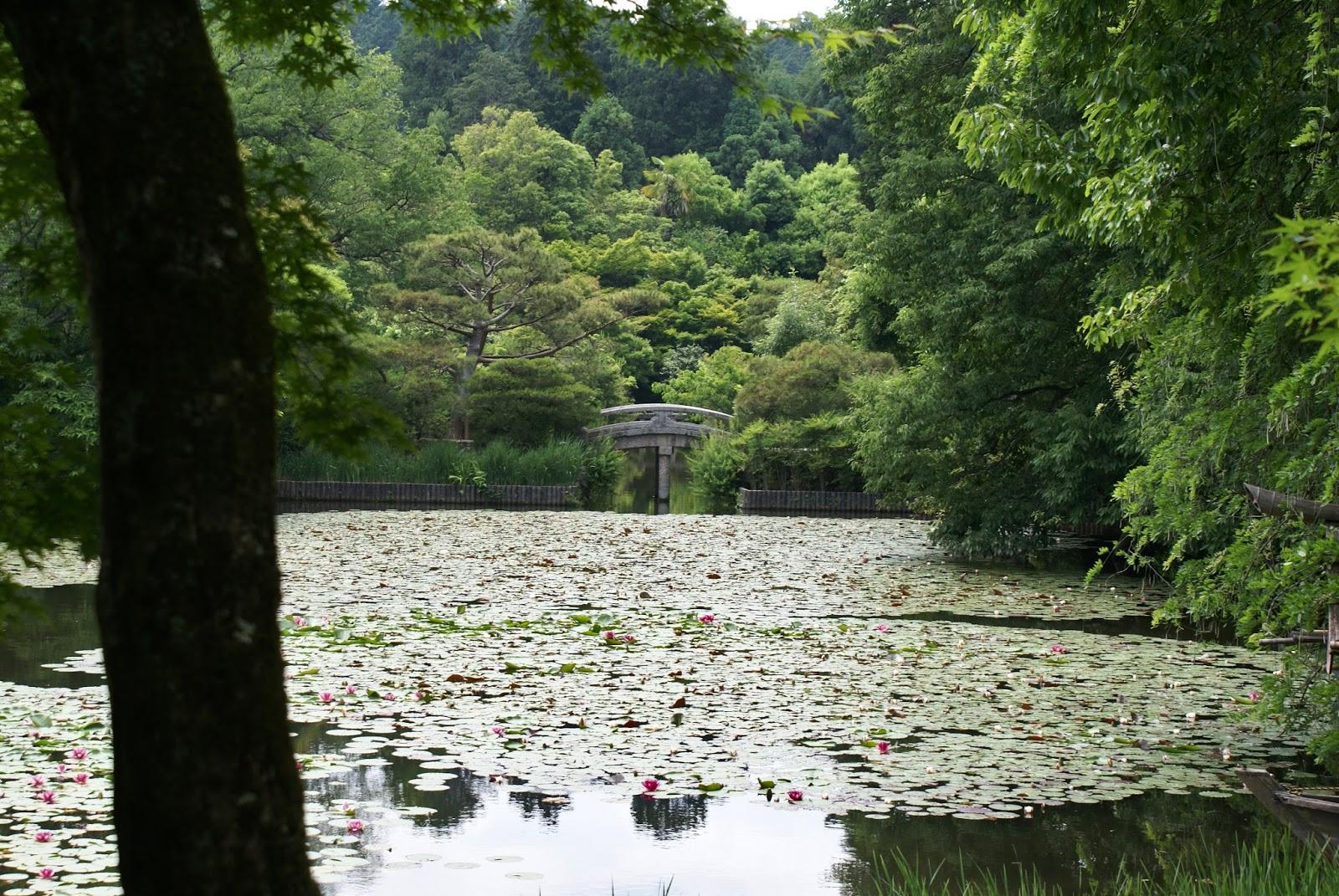 ryoan ji buddhist temple garden pond kyoto kansai japan asia