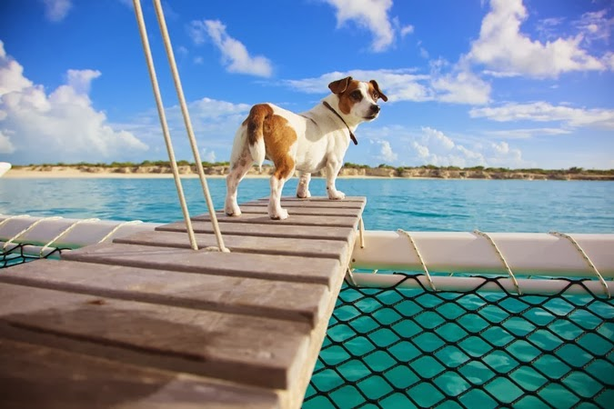 Photo of a Jack Russell Terrier on sail boat Turks & Caicos Islands. Photos by eyeSpice. Notes from the Pack.
