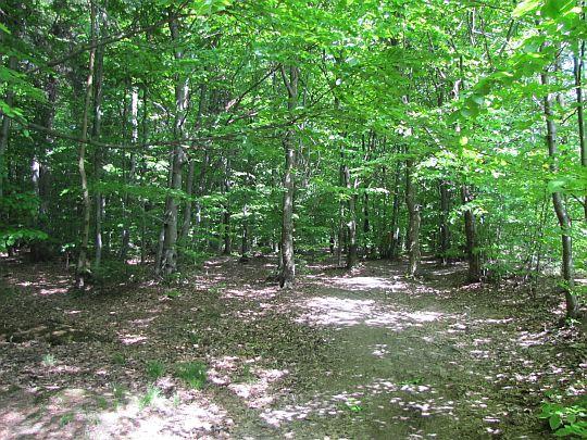 Leśny trakt.