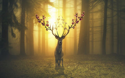 Cerf Magique dans la Forêt - Fond d'écran en Full HD 1080p