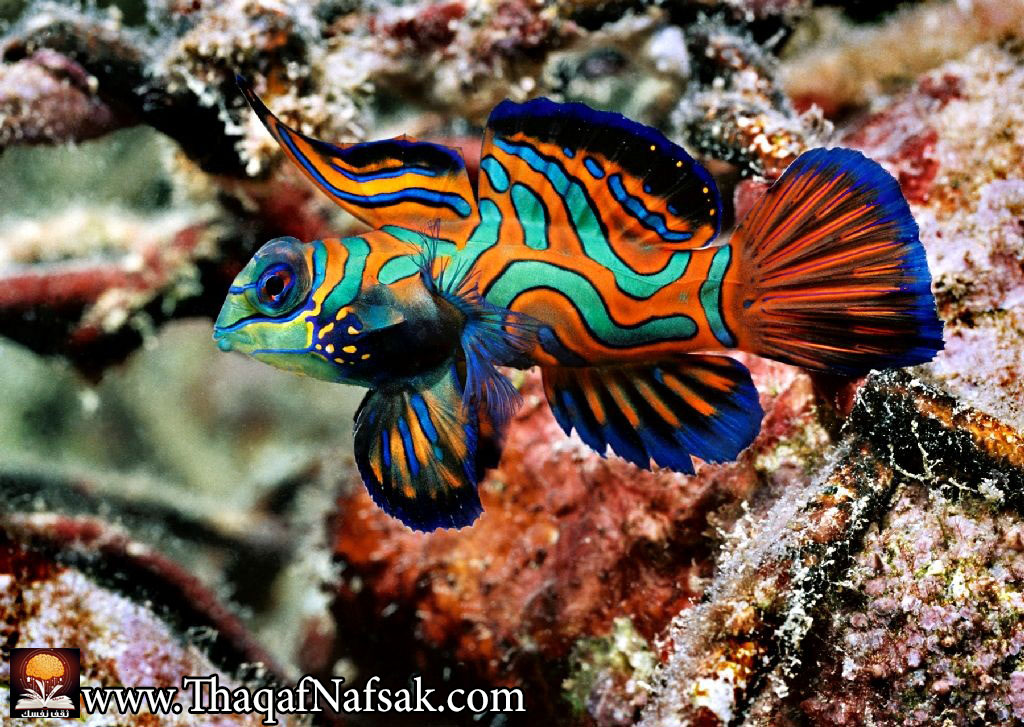 10 for Exotic fish and pets