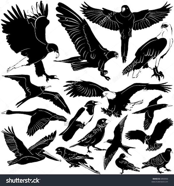 Bird Vector  Details