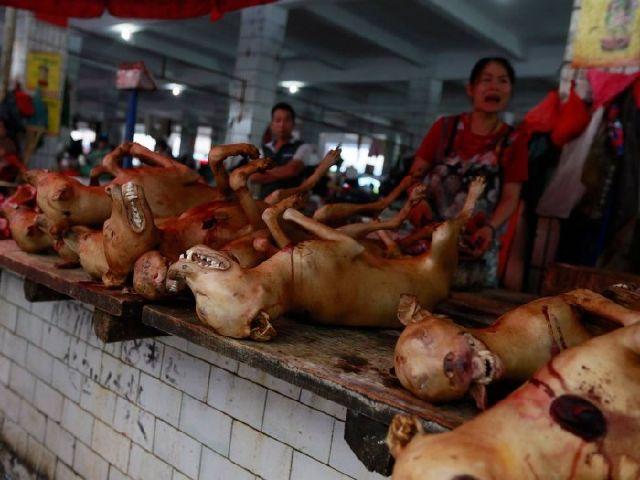 http://3.bp.blogspot.com/-ct0pBzDgXY0/VYiub5sQ4-I/AAAAAAAAP08/LjqaMMschiU/s1600/4851708_china-is-preparing-to-slaughter-and-eat_b1fb802c_m.jpg