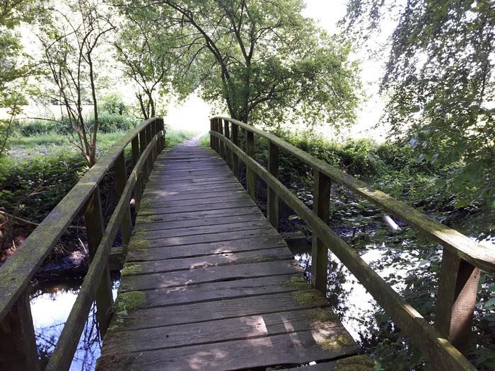 Brücke im Wald in Graubau, Schleswig-Holstein