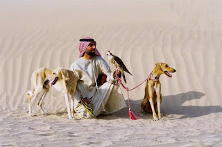 cães do deserto