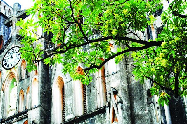 Hanoi in young leaf season 5