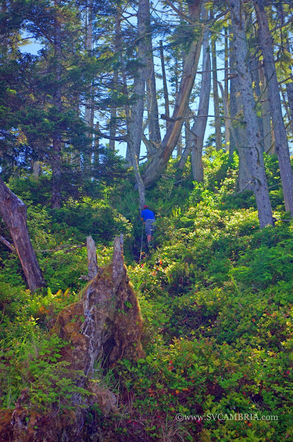 At times the terrain along the Calvert Island trails is rugged and requires climbing.