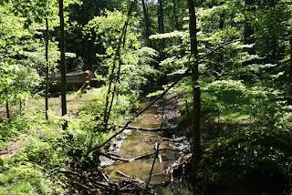 Ein Bach fließt durch einen Wald