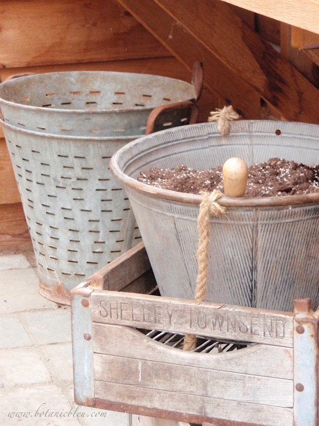 magnolia-market-vintage-olive-buckets-in-greenhouse