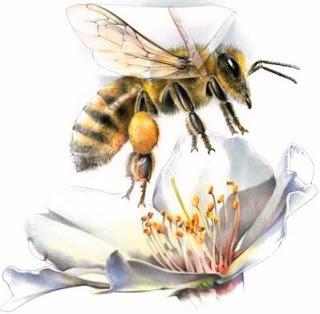 Imagen de una abeja volando sobre una flor