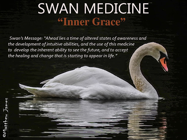 Swan Totem Meaning