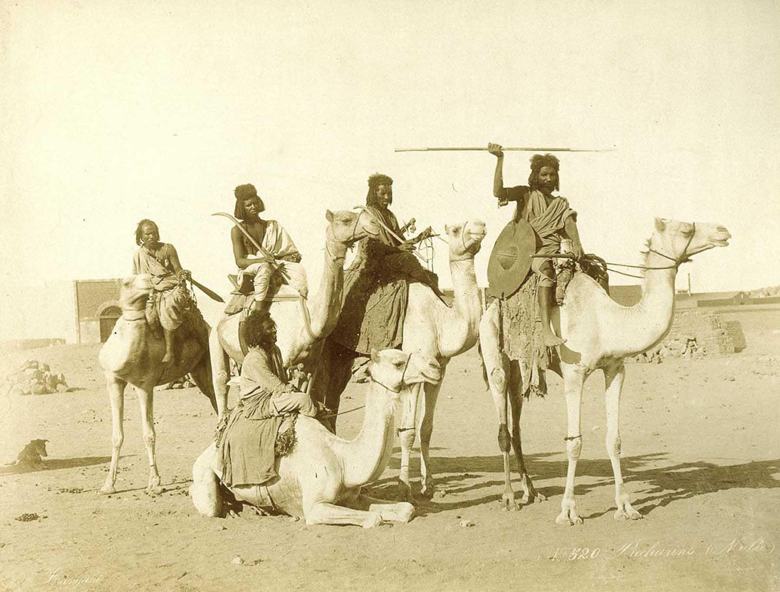 Hombres bicharin en camellos.