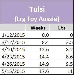 Raising A Mini Aussie Growth Stats