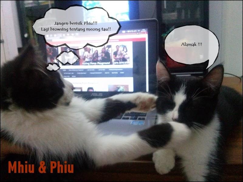 #Save Kucing Kampung