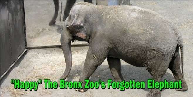 The Bronx Zoo Elephant happy