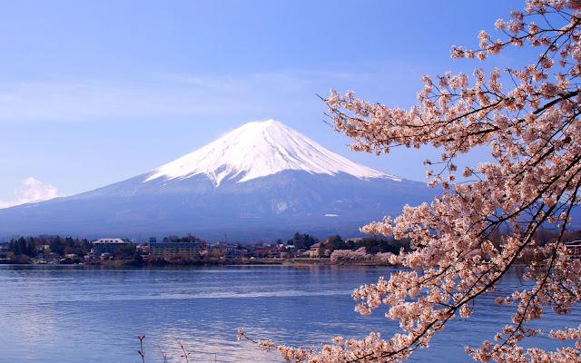 Bunga Sakura di Gunung Fujiama Japan