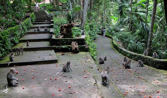 Hutan Monyet Ubud / Ubud Monkey Forest