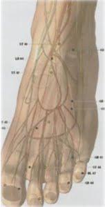 Terapi     Meridien    Lambung      Untuk    Sakit     Kaki,   Rematik,     Radang     Sendi,    Sakit Pinggang, Mimisan, Amandel, Sariawan, Pingsan, Gangguan Hidung, Radang Mata, Stroke