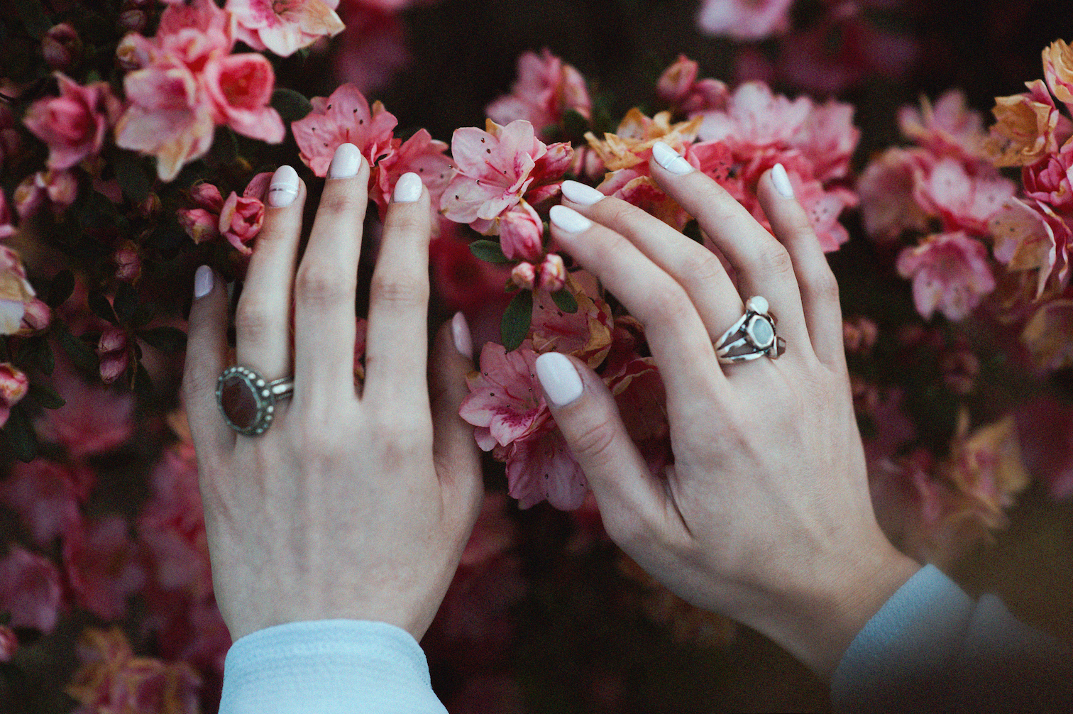 woman's hands on pink flowers showing off white manicure and diamond rings