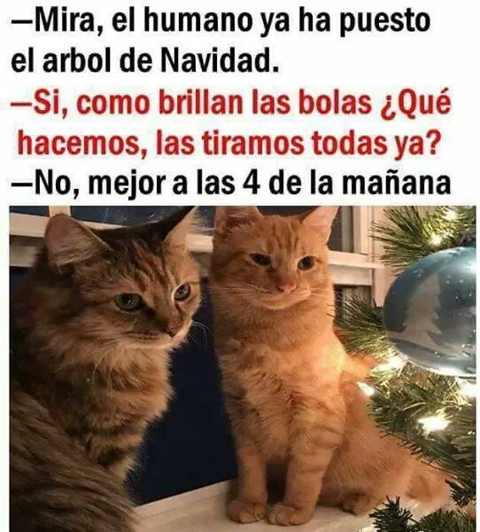 Imágenes divertidas de Navidad gatos