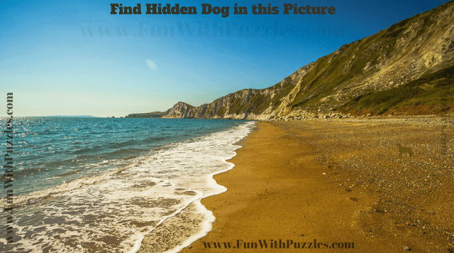 Find the Animal Puzzle