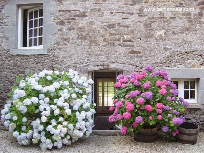 Flores al frente de una casa de piedra en Bretania, Francia