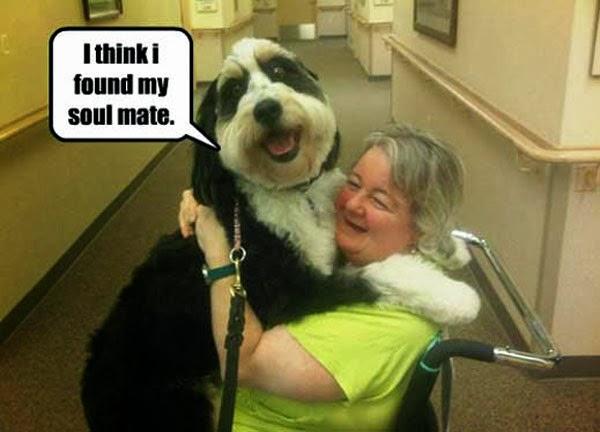 Funny dog hugging his master