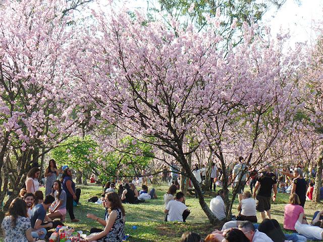 Vem aí a Festa das Cerejeiras no Parque do Carmo!