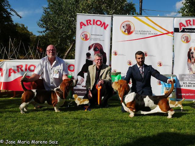 Resultados XXI Exposición Monográfica con CAC - Arcas (Cuenca) 2016 6