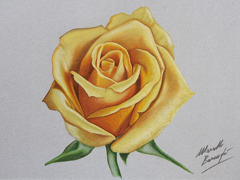 Yellow rose drawing marcello barenghi yellow rose drawing mightylinksfo