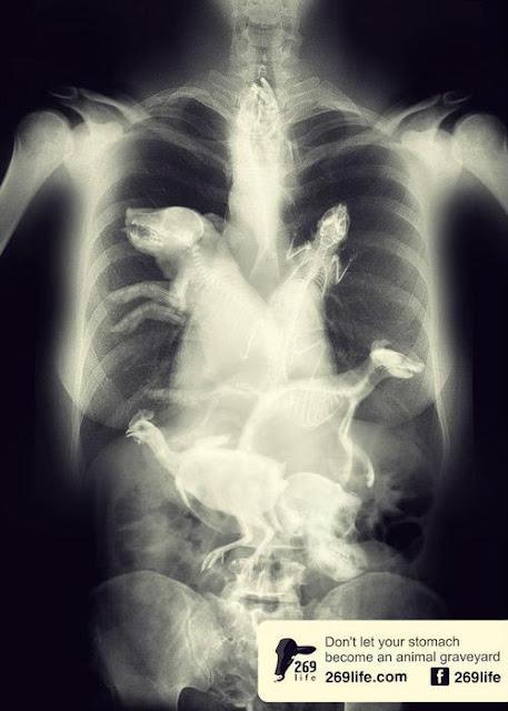 Tiere im menschlichen Magen