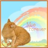 Remembering Moe