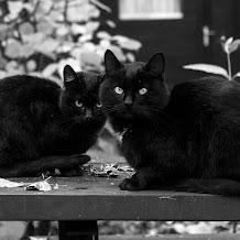 4 Mitos,Takhayul Yang Berhubungan Dengan Kucing