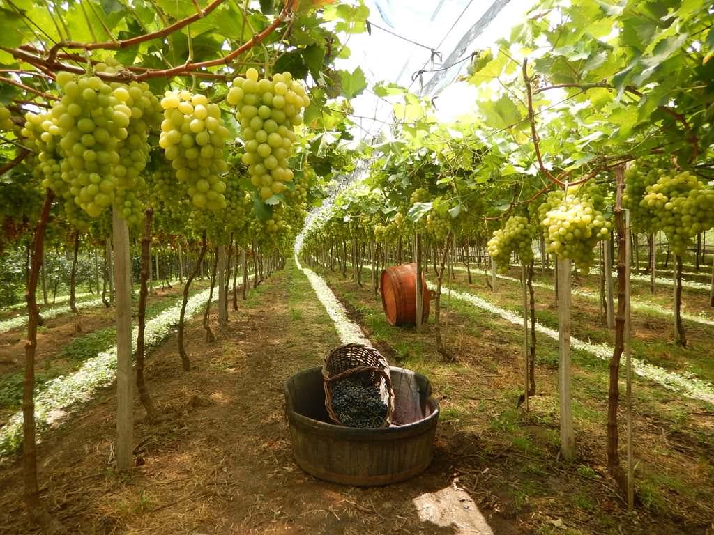 Vale dos Vinhedos - Espaço Uva e Vinho