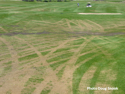 iaTURF: More Ascochyta Disease Across the State