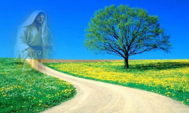 Disse-lhe Jesus: Eu Sou o Caminho, e a Verdade e a Vida...
