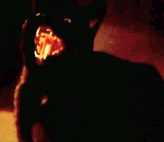The black cat in The Legend of Hell House