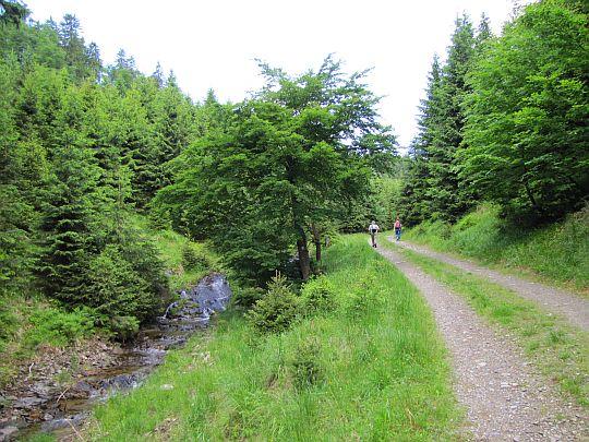 Droga wzdłuż potoku Branná.