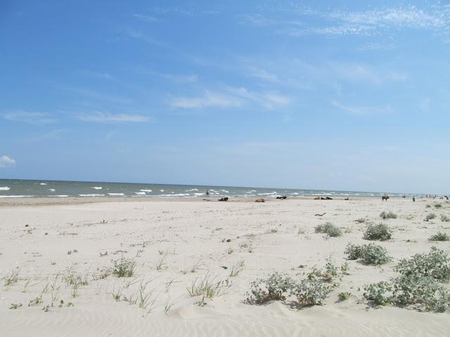 plaja superba delta dunarii