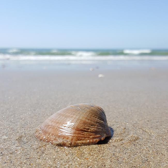 Spain, Spanien, Espana, seashell, Muschel, beach, Strand, playa