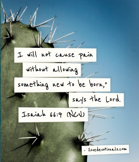 God Can Birth Life Out Of Our Pain | I Love Devotionals by Wendy van
