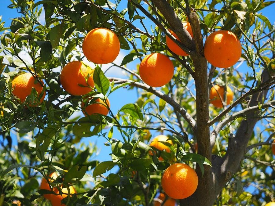 naranja y la belleza
