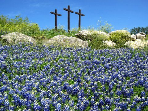 Bluebonnet Natural Healing Therapy Com Why I Named My