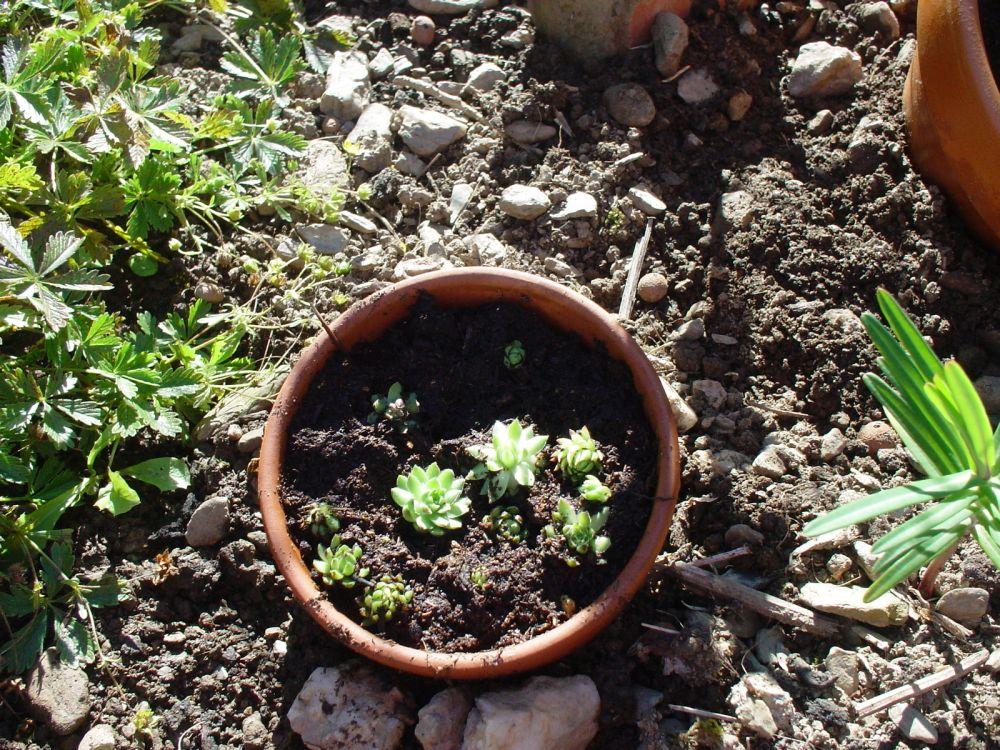 gartenbasteleien – proxyagent, Garten und bauen
