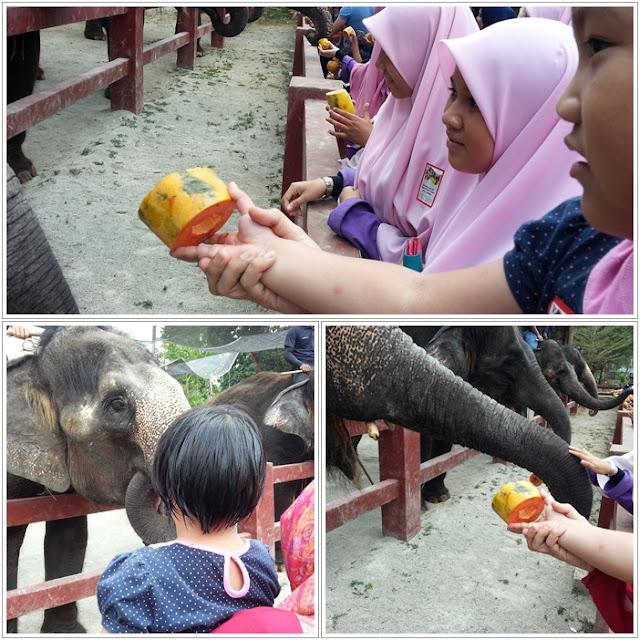 Tempat Menarik di Pahang|Pusat Konservasi Gajah, Kuala Gandah, Lanchang