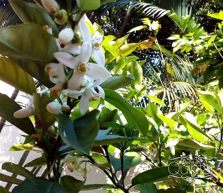 Laranjeira em flor no quintal da Paula =)
