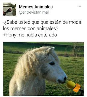 pony me había enterado
